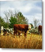 Beautiful Bovine 1 Metal Print