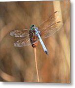 Beautiful Broken Wing Metal Print