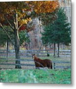 Beautiful Brown Horse Metal Print