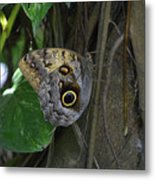 Beautiful Brown Morpho Butterfly In A Lush Garden  Metal Print