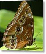 Beautiful Butterfly Wings Of Meadow Brown Metal Print