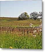 Beautiful California Vineyard Framed With Flowers Metal Print