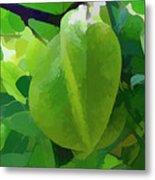 Beautiful Carambola Fruit Tree Metal Print