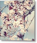 Beautiful Cherry Tree Blossom Metal Print