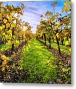 Beautiful Colors On The Vines Metal Print