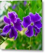 Beautiful Duranta Flower Blossoming Metal Print