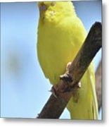 Beautiful Face Of A Yellow Budgie Bird Metal Print