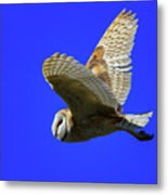 Beautiful Flight Metal Print