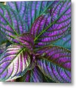 Beautiful Foliage  Metal Print