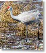Beautiful Day For A Walk -sandhill Crane   Metal Print
