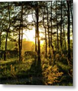 Beautiful Forest At Sunrise Metal Print