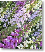 Beautiful Foxglove Metal Print