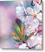 Beautiful Fruit Tree Blooming Metal Print
