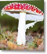 Beautiful Fungus Metal Print