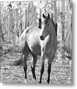 Beautiful Horse In Black And White Metal Print