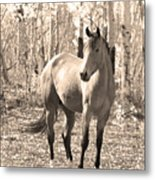 Beautiful Horse In Sepia Metal Print