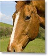 Beautiful Horse Portrait Metal Print by Meirion Matthias