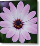 Beautiful In Pink Today Metal Print