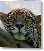 Beautiful Jaguar Metal Print