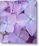 Beautiful Lavender Purple Hydrangea Flowers Baslee Troutman Metal Print