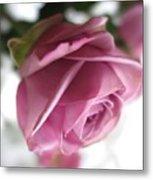 Beautiful Lavender Rose 2 Metal Print