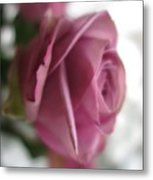 Beautiful Lavender Rose 3 Metal Print