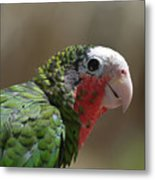 Beautiful Look At At The Profile Of A Conure Parrot Metal Print