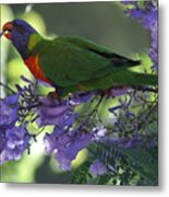 Beautiful Lorikeet Metal Print