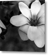 Beautiful Magnolia Metal Print