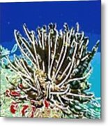 Beautiful Marine Plants 11 Metal Print by Lanjee Chee