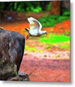 Beautiful Moment With A Bird Take Off , Wall Frame, Art Metal Print
