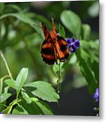 Beautiful Oak Tiger Butterfly On Purple Flowers Metal Print