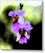 Beautiful Orchid Metal Print