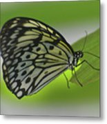 Beautiful Paper Kite Butterfly On A Green Leaf Metal Print
