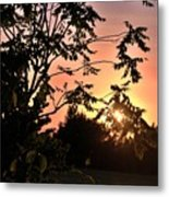 Beautiful Park Sunset View Trees Metal Print
