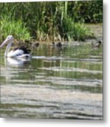 Beautiful Pelican Metal Print