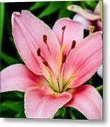 Beautiful Pink Lily Metal Print