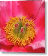 Beautiful Pink Peony Flower Vertical Metal Print