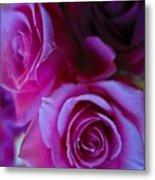 Beautiful Purple Roses 2 Metal Print
