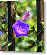 Beautiful Railroad Vine Flower II  Metal Print