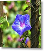 Beautiful Railroad Vine Flower Metal Print