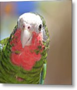 Beautiful Red Feathers On The Throat Of A Green Conure Bird Metal Print