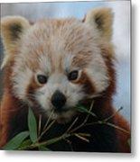 Beautiful Red Panda Metal Print