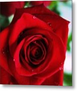 Beautiful Red Rose Abstract 3 Metal Print