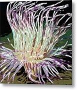 Beautiful Sea Anemone 1 Metal Print