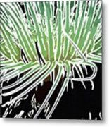 Beautiful Sea Anemone 3 Metal Print
