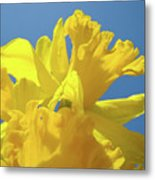 Beautiful Spring Daffodil Bouquet Flowers Blue Sky Art Prints Baslee Troutman Metal Print