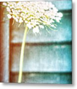 Beautiful Spring Flower Metal Print