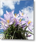 Beautiful Spring Flower Blossom In Sky Background Metal Print