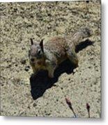 Beautiful Squirrel Standing In A Sandy Area In California Metal Print